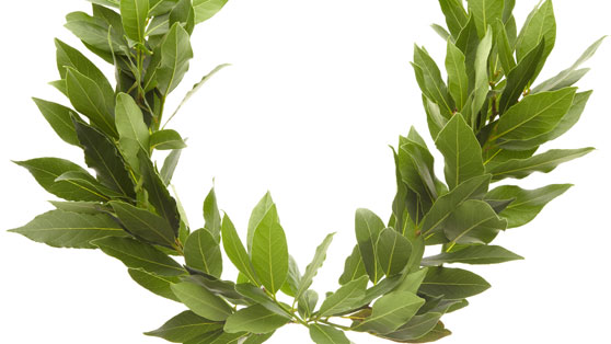 Laurel wreath